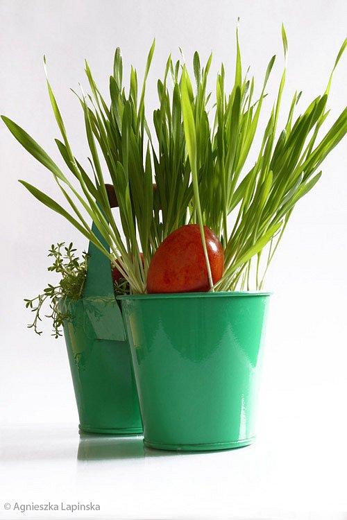 eggs-in-a-bucket.jpg